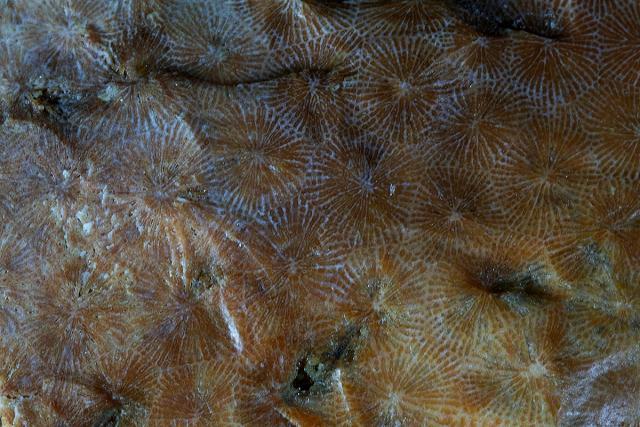 Immagine Allegata: corallini.jpg