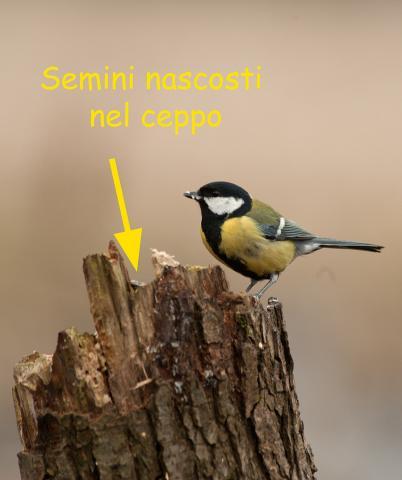 Immagine Allegata