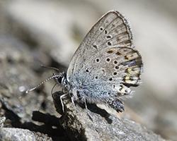 [macro] Macro con figlio e farfalle