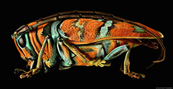 [macro] Levon Biss Microsculptures, 8000 scatti per una stampa...