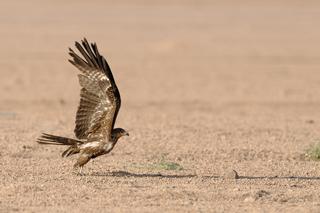 Libro Nikonland Natura: Ali sul Sinai