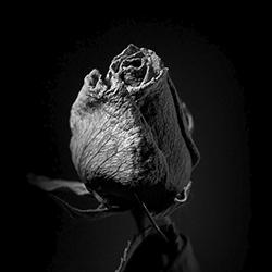 [cultura fotografica] Wabi Sabi, la bellezza dell'imperfezione.