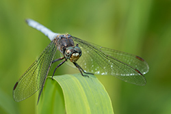 [natura] Libro Nikonland Natura 2014: Le Libellule del Parco Nord Milano